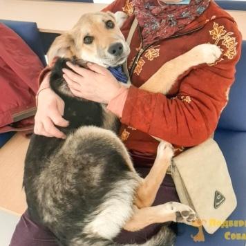 Гром (Громик) - Собаки в добрые руки