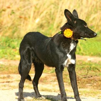 Эрмин - Собаки в добрые руки
