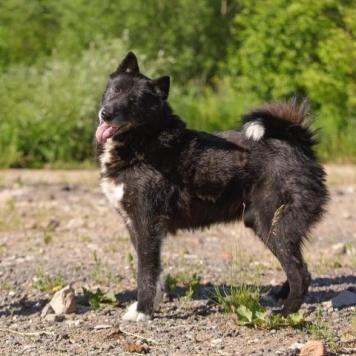 Будулай - Собаки в добрые руки