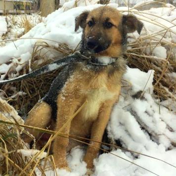 Альпа - Собаки в добрые руки