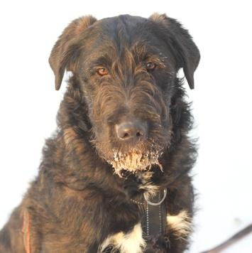 Броуди - Собаки в добрые руки