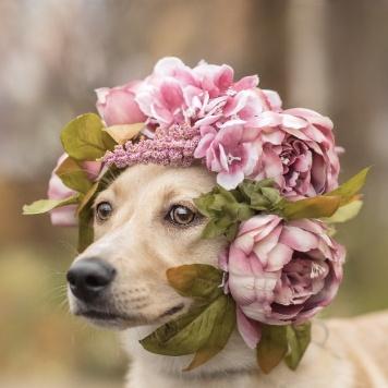 Сальса - Собаки в добрые руки