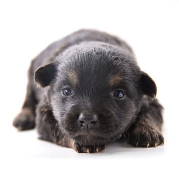 Люси - Собаки в добрые руки