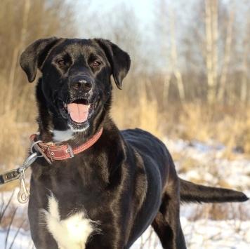 Валюша - Собаки в добрые руки