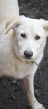 Яна - Собаки в добрые руки