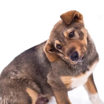 Геральд (Гера) - Собаки в добрые руки