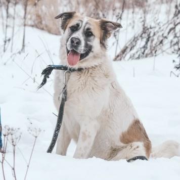 Шопен - Собаки в добрые руки