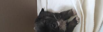 Тобик - Собаки в добрые руки