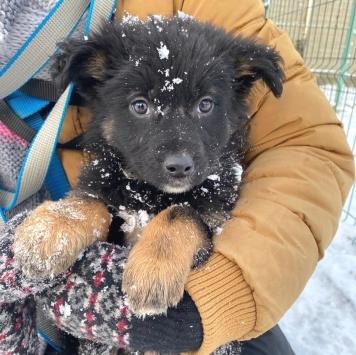 Фифа - Собаки в добрые руки