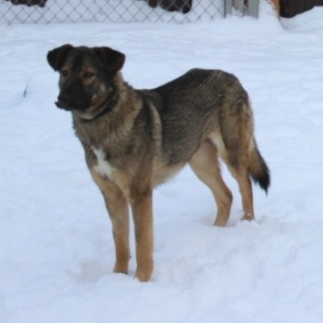 Буся (Бусинка) - Собаки в добрые руки