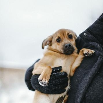 Рыжик - Собаки в добрые руки