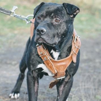 Чароит - Собаки в добрые руки