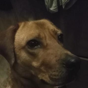 Рэд - Найденные собаки
