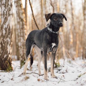 Демера - Собаки в добрые руки