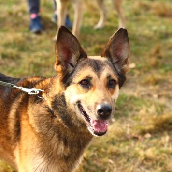 Адыгея - Собаки в добрые руки