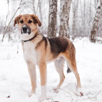 Баку - Собаки в добрые руки
