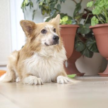 Тарасик - Собаки в добрые руки