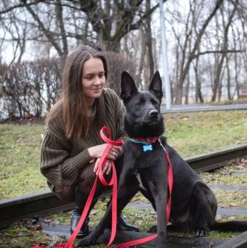 Мирон - Собаки в добрые руки