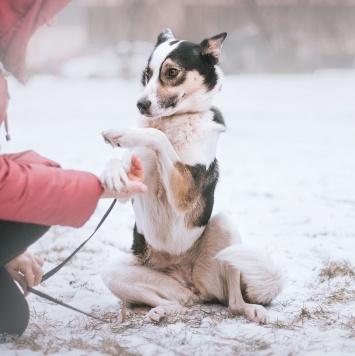 Айрис - Собаки в добрые руки