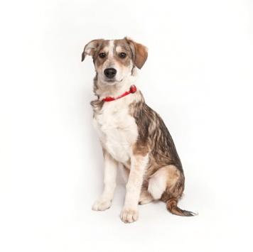 Корица - Собаки в добрые руки