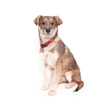 Горчичка - Собаки в добрые руки