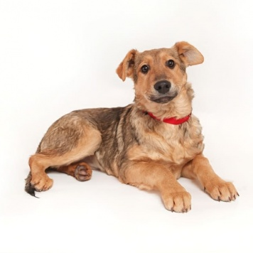 Брусничка - Собаки в добрые руки