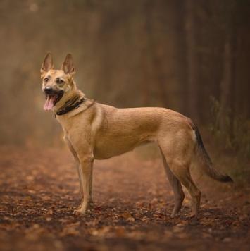 Сакура - Собаки в добрые руки