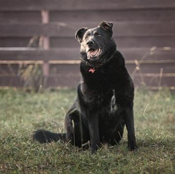 Полкан - Собаки в добрые руки