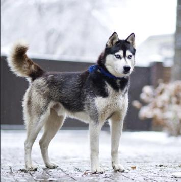Норд - Собаки в добрые руки