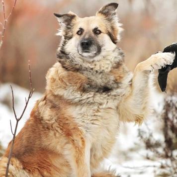 Тереза - Собаки в добрые руки