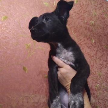 Чуня - Собаки в добрые руки