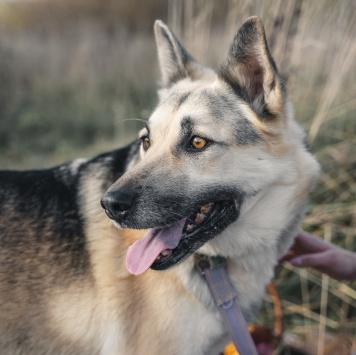 Полина - Собаки в добрые руки