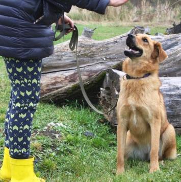 Виля - Собаки в добрые руки