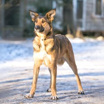 Бэкки - Собаки в добрые руки