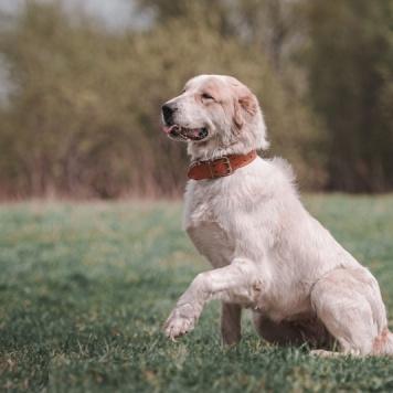 Шера - Собаки в добрые руки