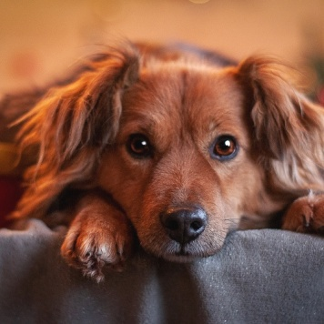 Босс - Собаки в добрые руки