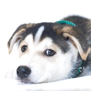 Хиппи - Собаки в добрые руки