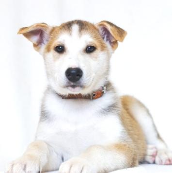 Хьюго - Собаки в добрые руки
