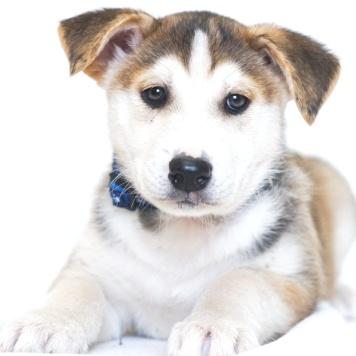 Хани - Собаки в добрые руки
