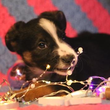 Тофу - Собаки в добрые руки