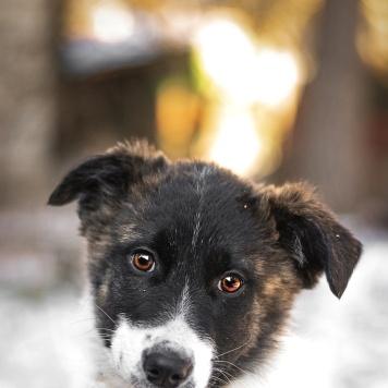 Юппи - Собаки в добрые руки
