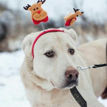Нортон - Собаки в добрые руки