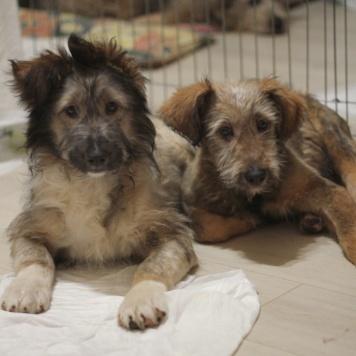 Булочка и Филя - Собаки в добрые руки
