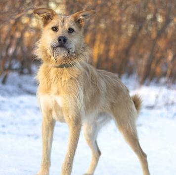 Сэмми - Собаки в добрые руки
