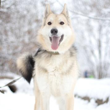 Твикс - Собаки в добрые руки