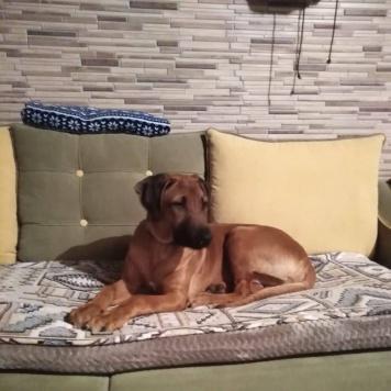Ватсон - Пропавшие собаки