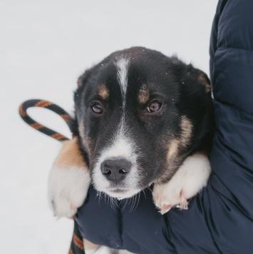 Вайк - Собаки в добрые руки