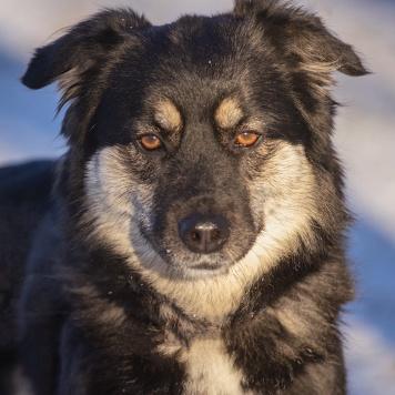 Озорная Кики - Собаки в добрые руки