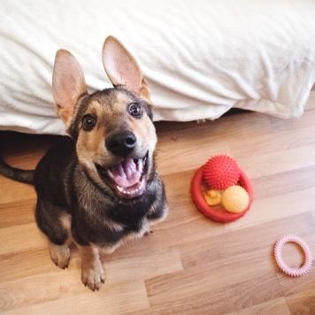 Шона - Собаки в добрые руки