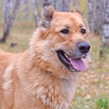 Бомбический Юм - Собаки в добрые руки